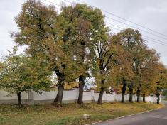 Příroda Tasovice